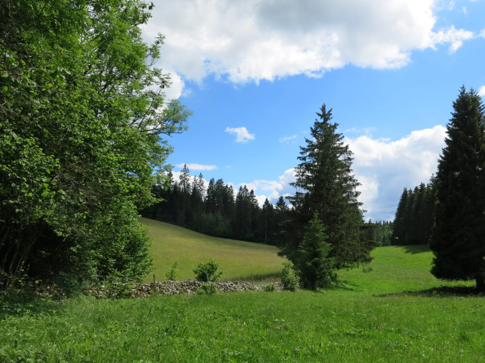 Paysage de la haute vallée du Doubs