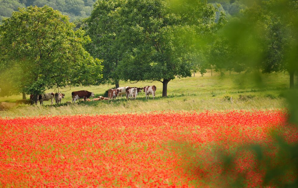 Un paysage de polyculture