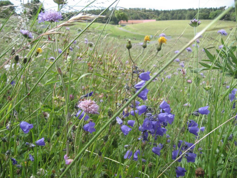 De la bonne herbe pour le Comté
