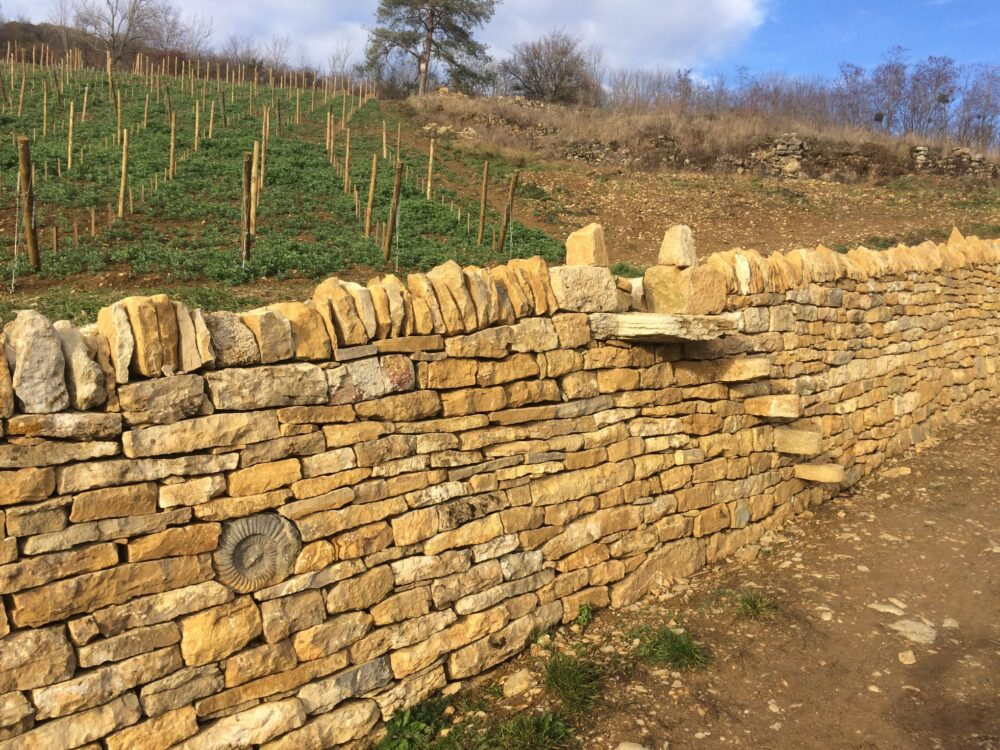 Mur remonté dans les vignes du domaine Pignier