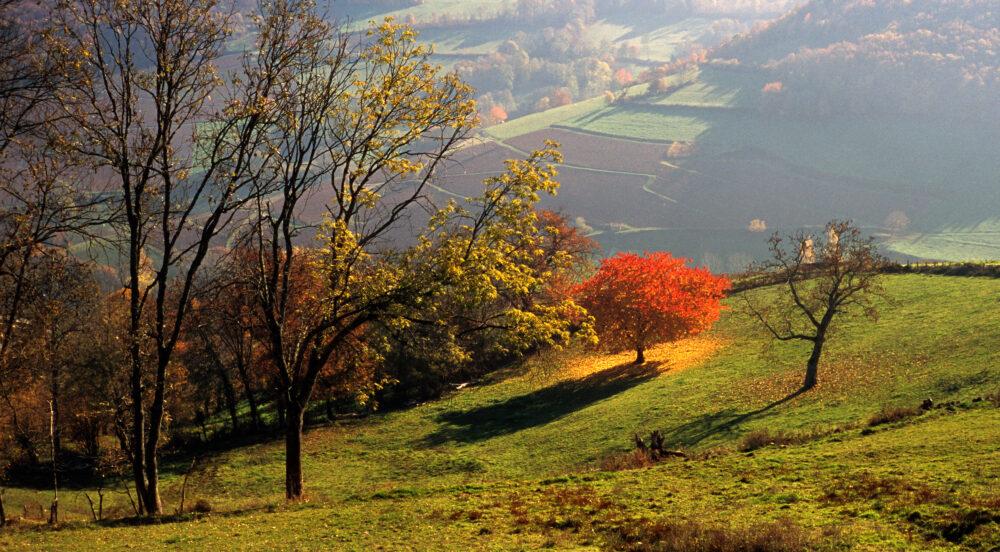 Paysag ed'automne