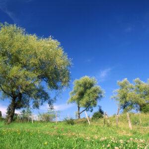ViaCluny.fr Jura Sud Revermont patrimoine villages tourisme vignoble