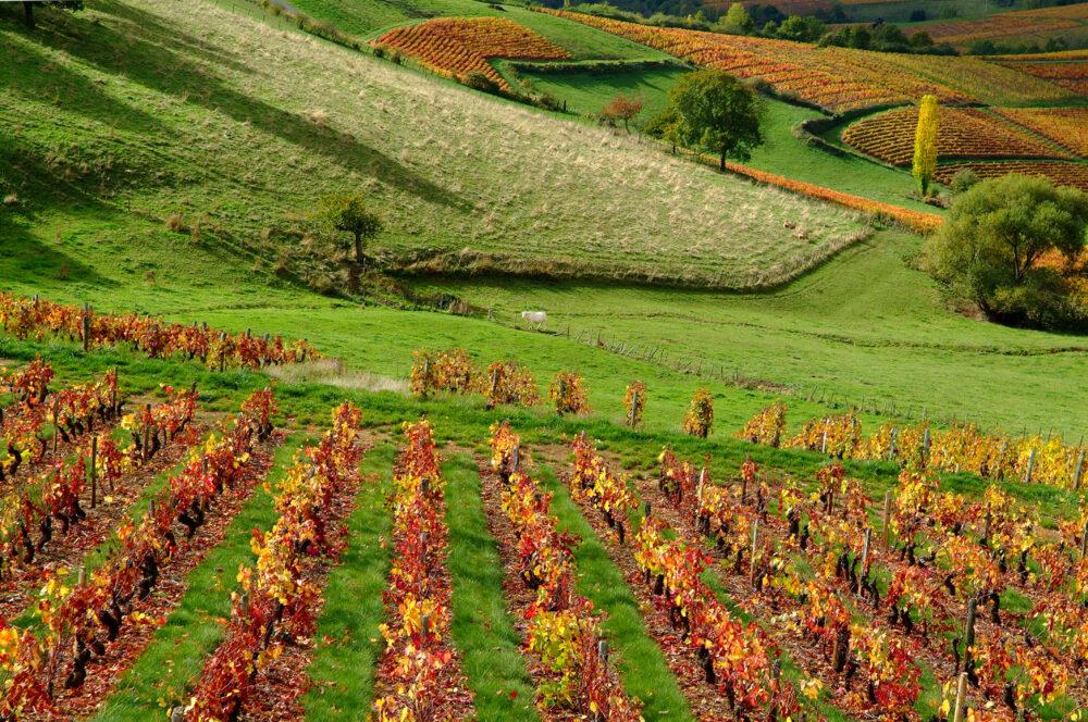 Un paysage de vignes et vallons