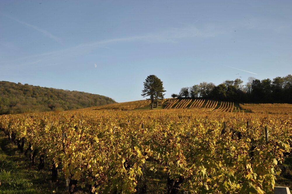 Un village réputé pour son vignoble